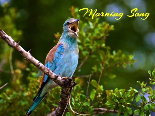 Bird Praise To God_Fotor